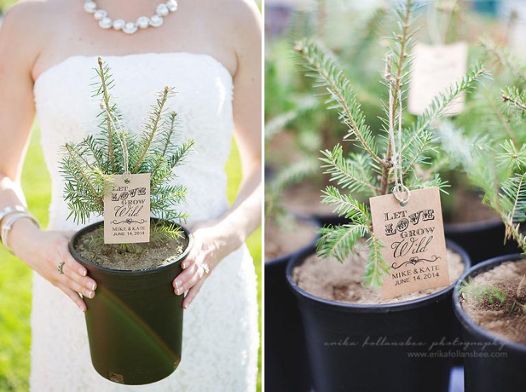 NH wedding favor evergreen trees seedling