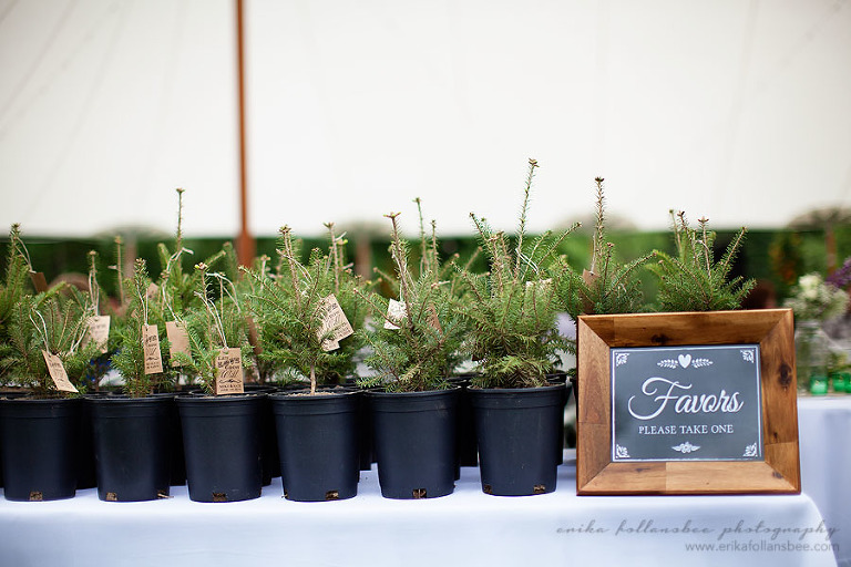 evergreen trees wedding favors