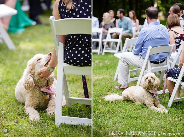 dog at ceremony